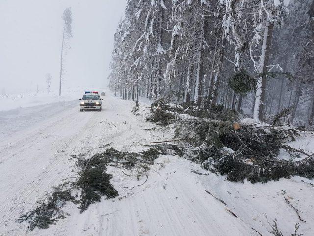 copaci cazuti belis